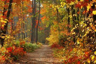 Accrobranche : randonnées nature dans les arbres - 1001 Stages